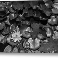 Pond - 36 x 24 inch Metal Print by Lyle Hatch @ Fine Art America