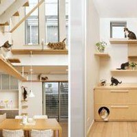 Pet Purrrfect: The Ultimate Cat-Friendly Interior Design | Designs & Ideas on Dornob