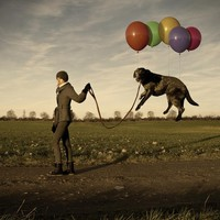 """Lazy Dog"" - Art Print by Erik Johansson"