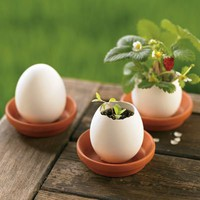 Organic Strawberry, Mint & Petunia Plant Egglings from RedEnvelope.com