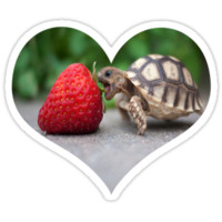 A Turtle Love Affair