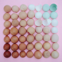 FOR THE BIRDS egg shell gradient 10x10 photograph print