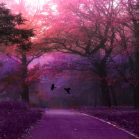 """Nature Photography, Surreal Haunting Trees Forest Woodlands, Ravens, Purples Pink Fine Art Nature Photograph 5"""" x 5"""""""